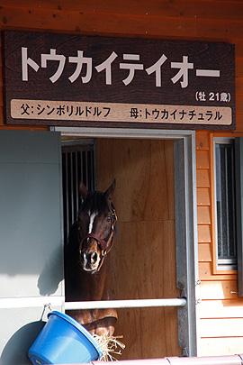 トウカイテイオーの写真9